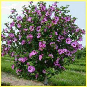 Лиственные и декоративно-цветущие кустарники, деревья.